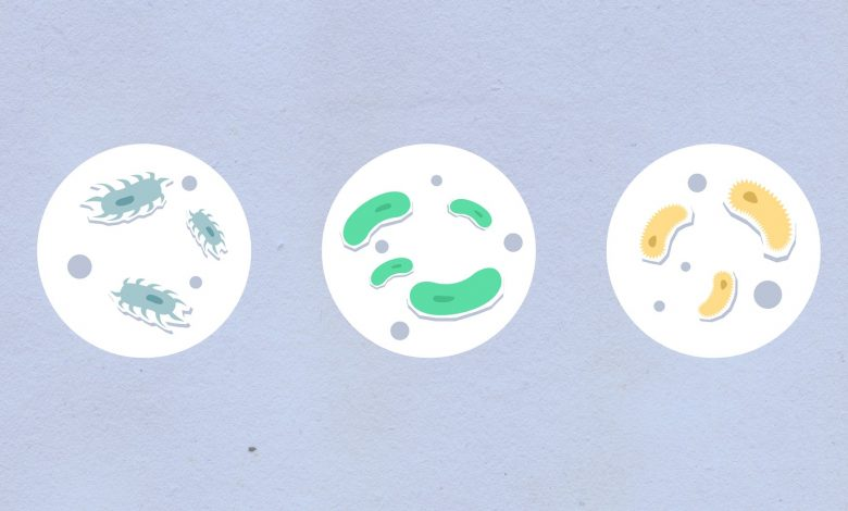الخلية الصناعية