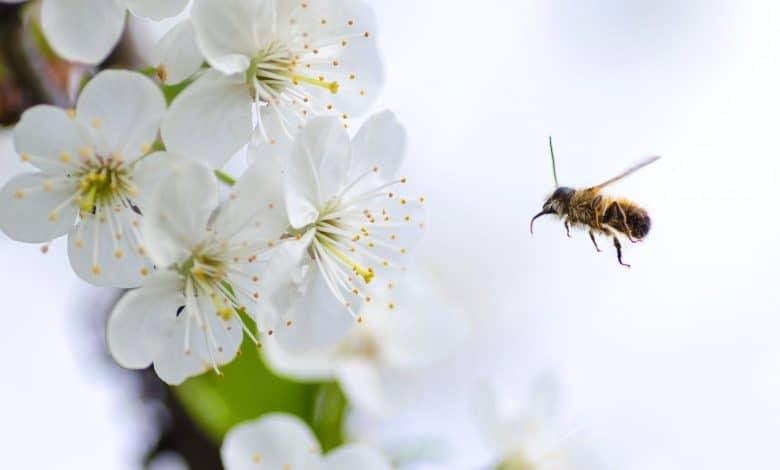 مستعمرة النحل