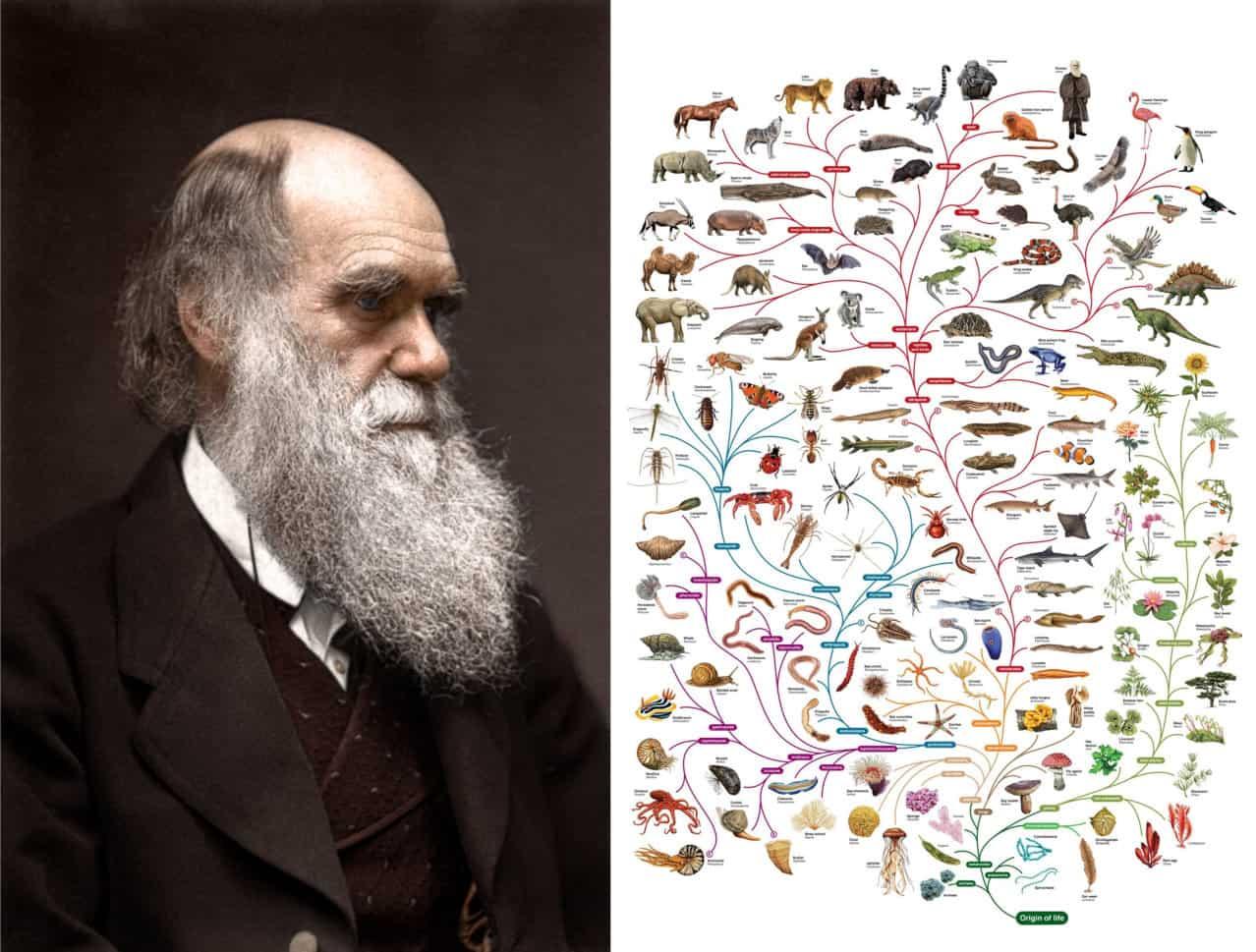 كيف تعمل نظرية التطور