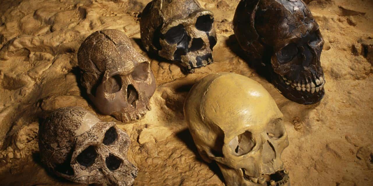 Photo of نظرية التطور: تطور الإنسان 2، مقابلة مع د. فيصل الصايغ